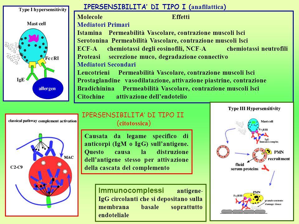 IPERSENSIBILITA' DI TIPO I ( anafilattica ) Molecole Effetti Mediatori Primari Istamina Permeabilità Vascolare, contrazione muscoli lsci Serotonina Pe