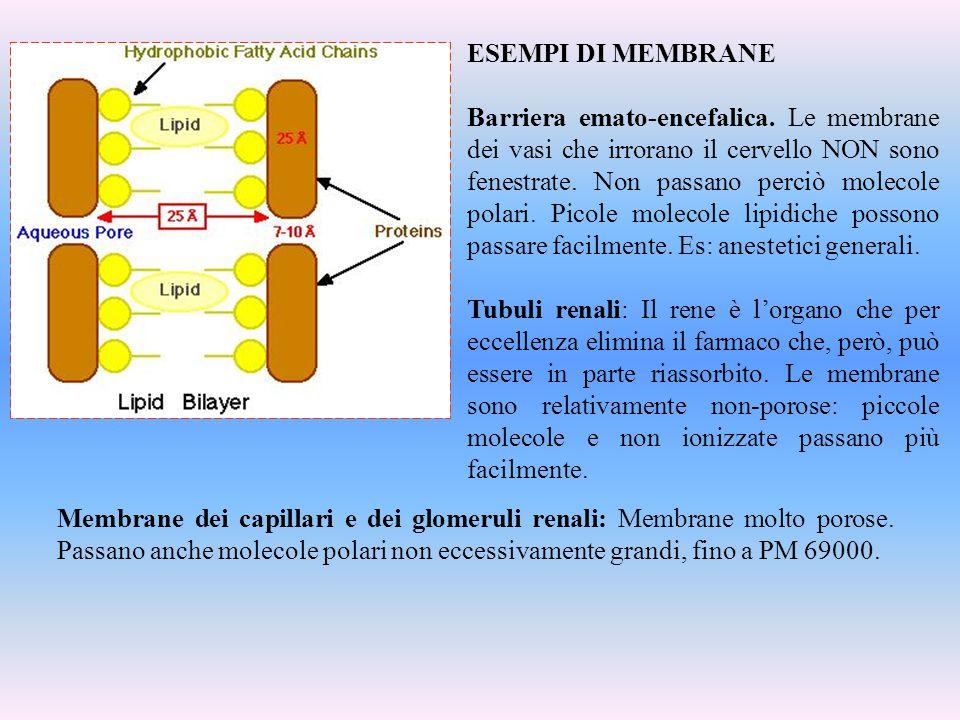ESEMPI DI MEMBRANE Barriera emato-encefalica. Le membrane dei vasi che irrorano il cervello NON sono fenestrate. Non passano perciò molecole polari. P