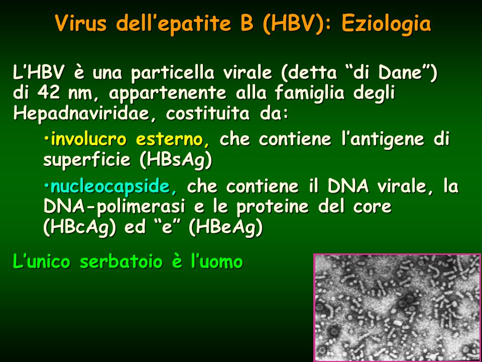 Virus dell'epatite B (HBV): Eziologia L'HBV è una particella virale (detta di Dane ) di 42 nm, appartenente alla famiglia degli Hepadnaviridae, costituita da: involucro esterno, che contiene l'antigene di superficie (HBsAg)involucro esterno, che contiene l'antigene di superficie (HBsAg) nucleocapside, che contiene il DNA virale, la DNA-polimerasi e le proteine del core (HBcAg) ed e (HBeAg)nucleocapside, che contiene il DNA virale, la DNA-polimerasi e le proteine del core (HBcAg) ed e (HBeAg) L'unico serbatoio è l'uomo