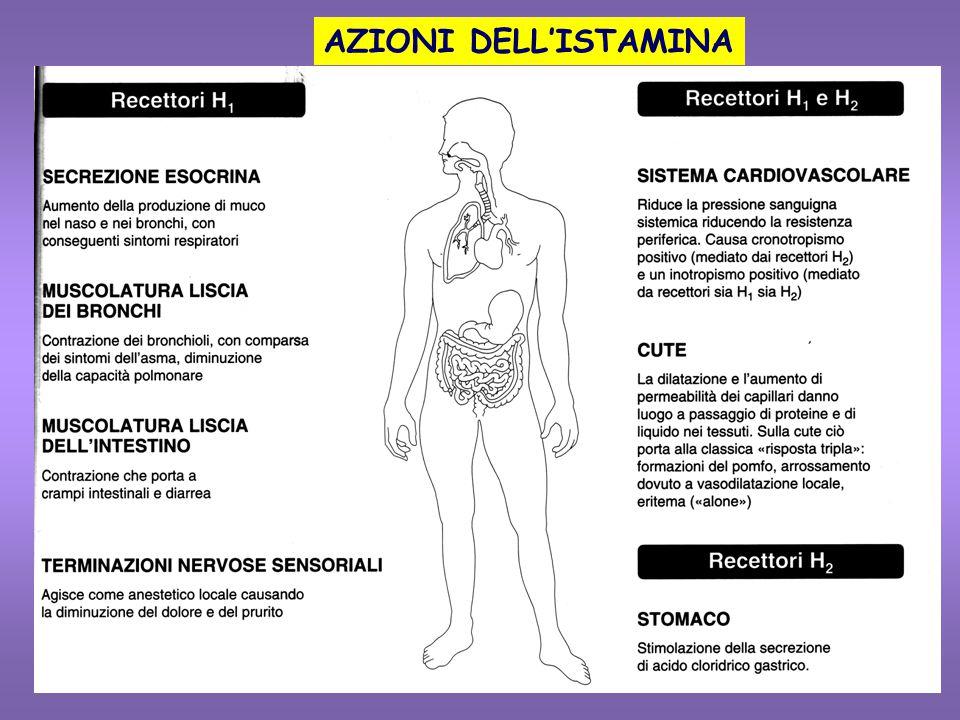 FARMACOLOGIA CLINICA DEGLI ANTI-H 2  Ulcera peptica: Miglioramento significativo del trattamento dell'ulcera L'uso profilattico può prevenire le recidive Cimetidina: dose iniziale di 0.9-1.6 g/dì per poi passare a 400mg  Ulcera gastrica: allevia i sintomi e promuove la guarigione  Tumore di Zollinger-Ellison (tumore secernente gastrina): controllo della sintomatologia Alle dosi terapeutiche NON interferiscono sulla pressione arteriosa e sul cuore