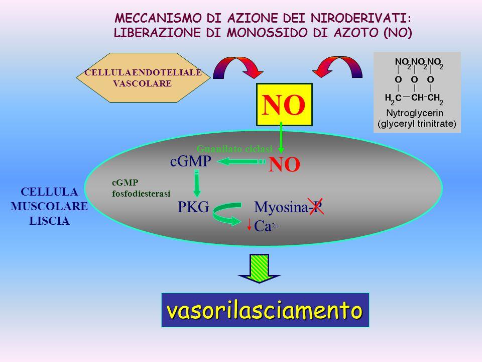 CELLULA MUSCOLARE LISCIA NO cGMP PKGMyosina-P Ca 2+ cGMP fosfodiesterasi Guanilato ciclasi vasorilasciamento MECCANISMO DI AZIONE DEI NIRODERIVATI: LI