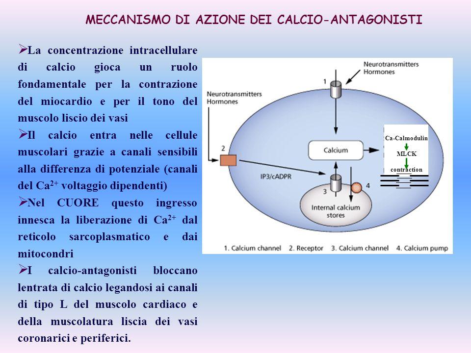 MECCANISMO DI AZIONE DEI CALCIO-ANTAGONISTI  La concentrazione intracellulare di calcio gioca un ruolo fondamentale per la contrazione del miocardio