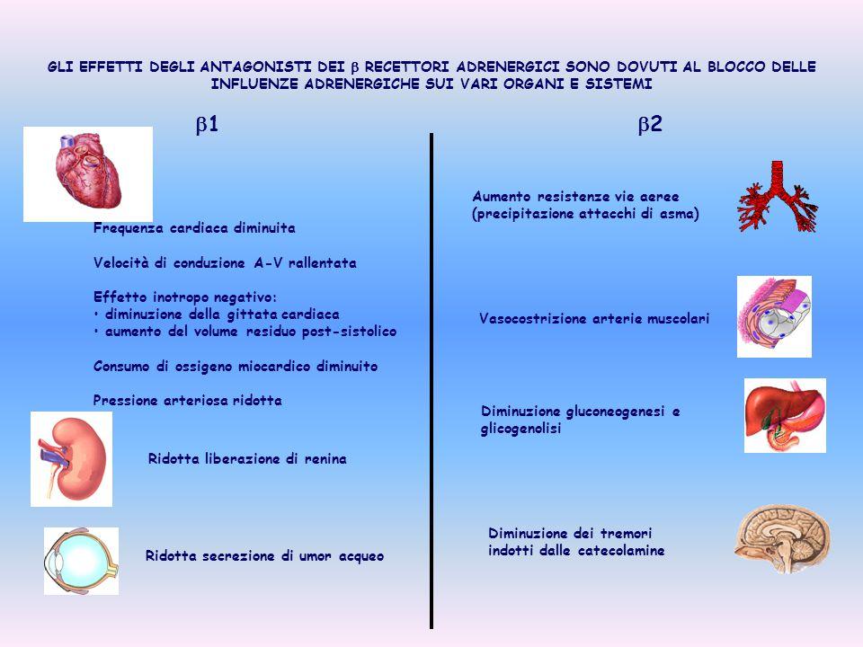 GLI EFFETTI DEGLI ANTAGONISTI DEI  RECETTORI ADRENERGICI SONO DOVUTI AL BLOCCO DELLE INFLUENZE ADRENERGICHE SUI VARI ORGANI E SISTEMI 11 22 Frequ