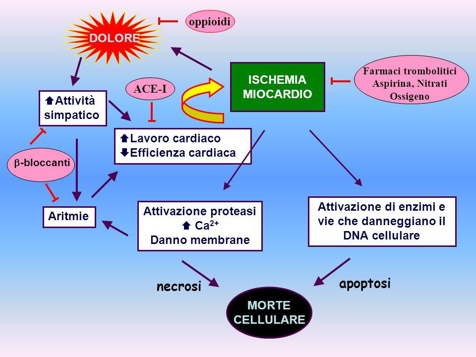 Attivazione proteasi  Ca 2+ Danno membrane ISCHEMIA MIOCARDIO DOLORE Attivazione di enzimi e vie che danneggiano il DNA cellulare MORTE CELLULARE Ari