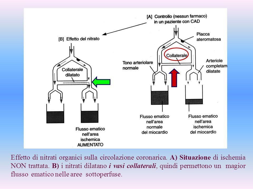 Effetto di nitrati organici sulla circolazione coronarica. A) Situazione di ischemia NON trattata. B) i nitrati dilatano i vasi collaterali, quindi pe
