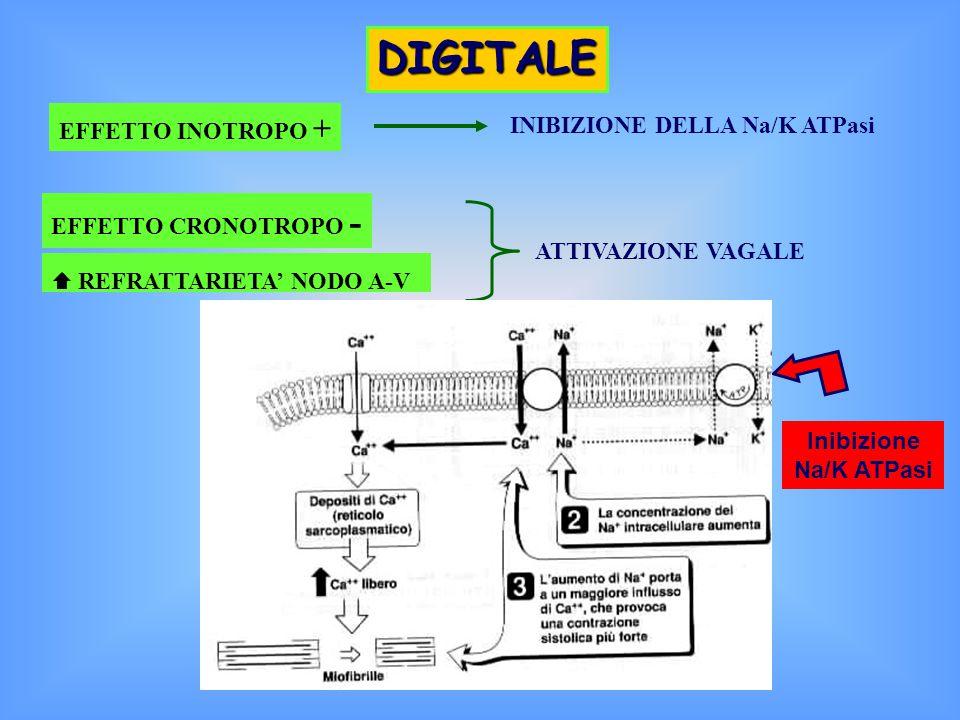 DIGITALE EFFETTO INOTROPO + INIBIZIONE DELLA Na/K ATPasi EFFETTO CRONOTROPO - ATTIVAZIONE VAGALE  REFRATTARIETA' NODO A-V Inibizione Na/K ATPasi