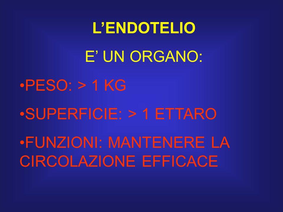 L'ENDOTELIO E' UN ORGANO: PESO: > 1 KG SUPERFICIE: > 1 ETTARO FUNZIONI: MANTENERE LA CIRCOLAZIONE EFFICACE