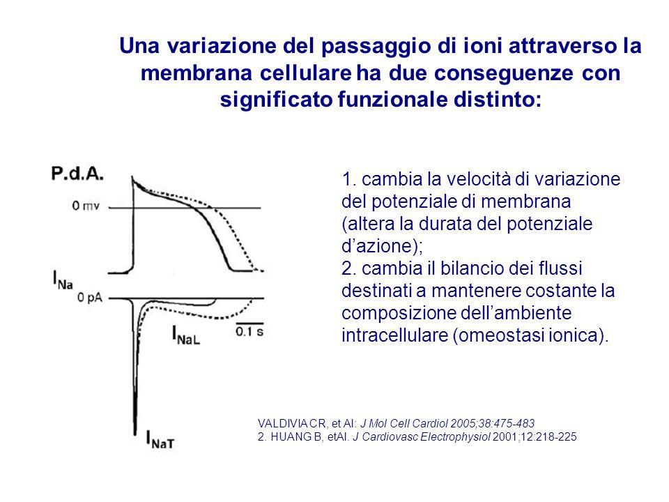 Una variazione del passaggio di ioni attraverso la membrana cellulare ha due conseguenze con significato funzionale distinto: 1. cambia la velocità di