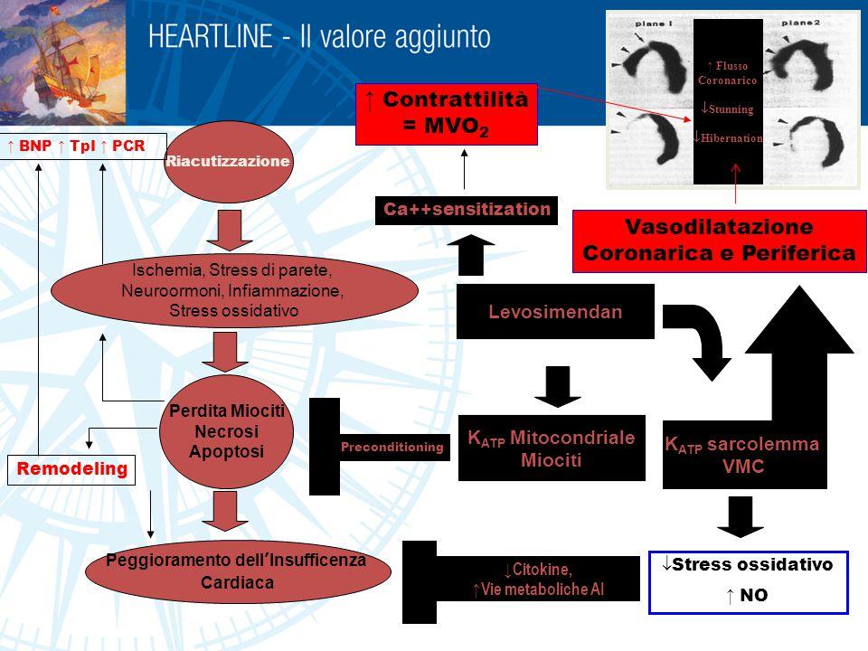 p < 0.05 Mortality at 30 days (prior HF= 75%) Mortality at 30 days (prior HF= 75%) 18% ADHF Inotropic Agents SURVIVE Intermittent Levosimendan Infusion : Maintain Optimal Hemodinamic Attenuate HF worsening Improve outcome Levosimendan Dobutamine