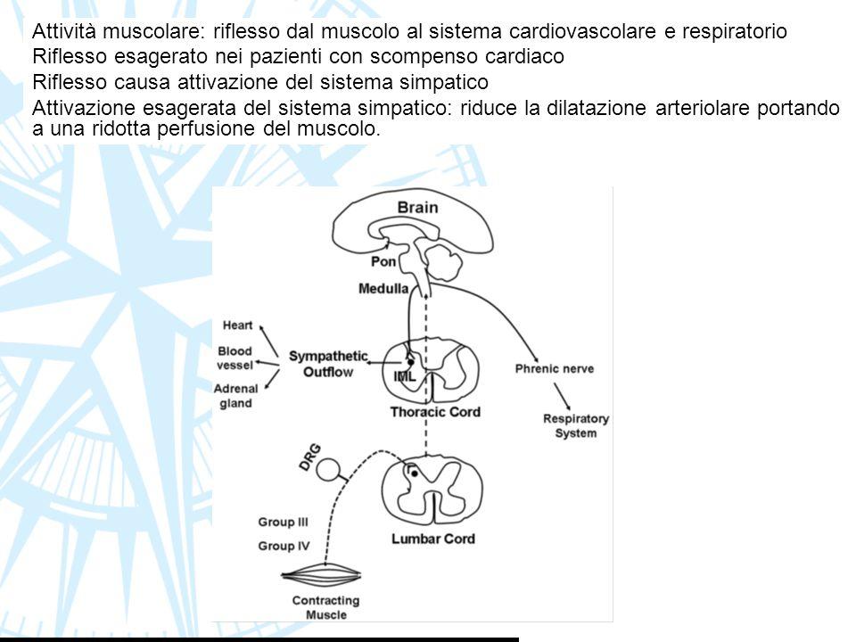 Attività muscolare: riflesso dal muscolo al sistema cardiovascolare e respiratorio Riflesso esagerato nei pazienti con scompenso cardiaco Riflesso cau
