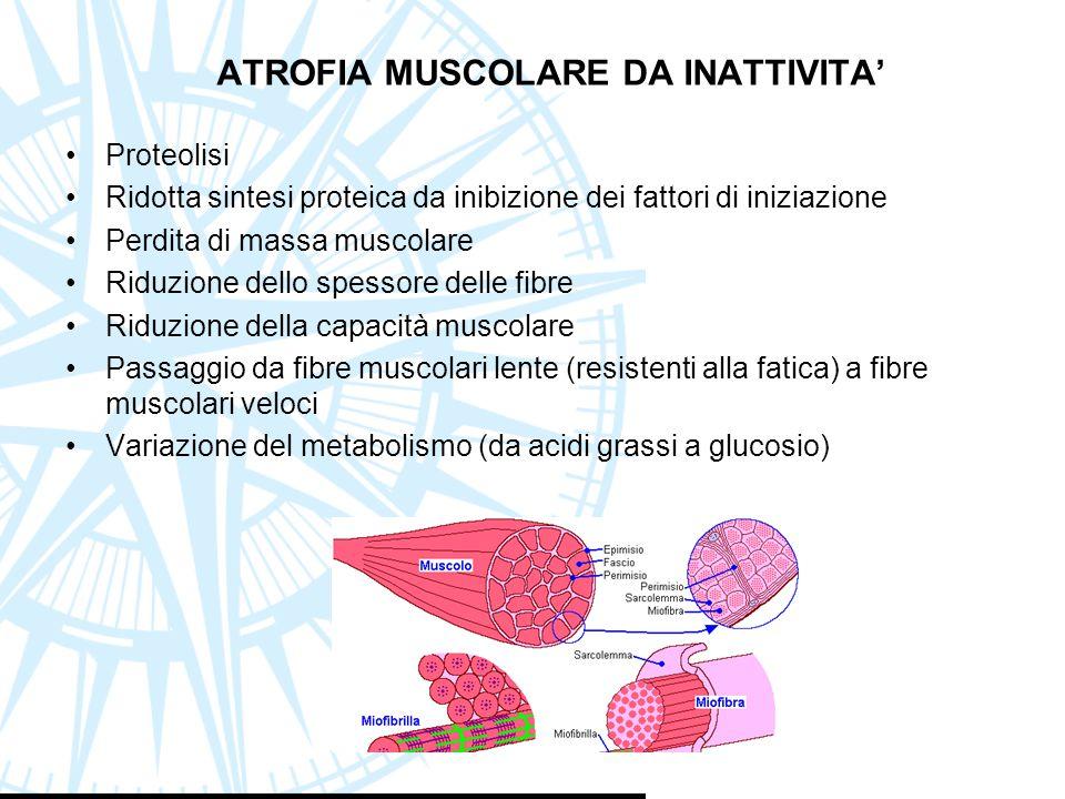 ATROFIA MUSCOLARE DA INATTIVITA' Proteolisi Ridotta sintesi proteica da inibizione dei fattori di iniziazione Perdita di massa muscolare Riduzione del