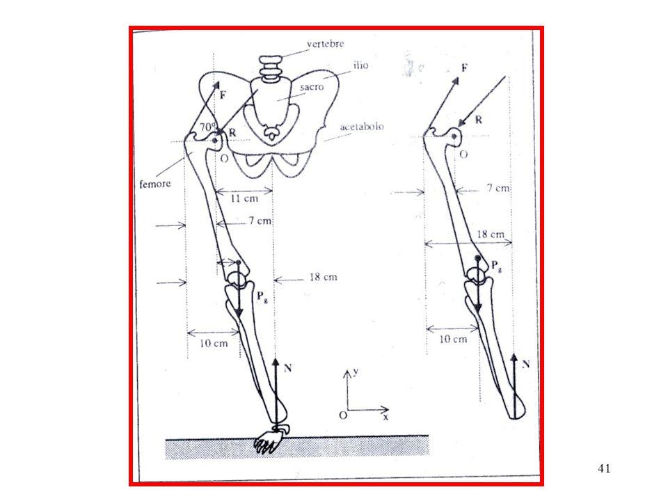 40 Le considerazioni precedenti ci portano a concludere che, dovendo sollevare un peso, per evitare di sottoporre la colonna vertebrale a grandi sollecitazioni, è opportuno scegliere la configurazione (b) flettendo le ginocchia e tenendo il tronco pressocché verticale, in modo che il fulcro O sia a piccola distanza dalle rette d'azione delle forze peso e sia quindi più piccolo (rispetto alla posizione (a)) il momento resistente da equilibrare.