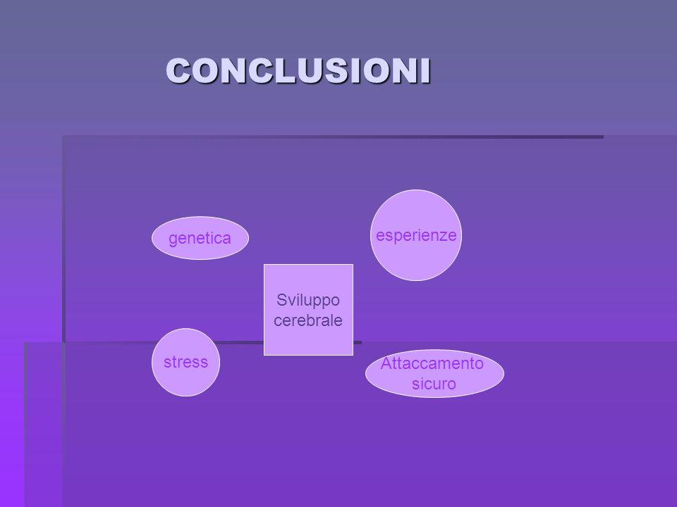 CONCLUSIONI CONCLUSIONI genetica esperienze stress Attaccamento sicuro Sviluppo cerebrale
