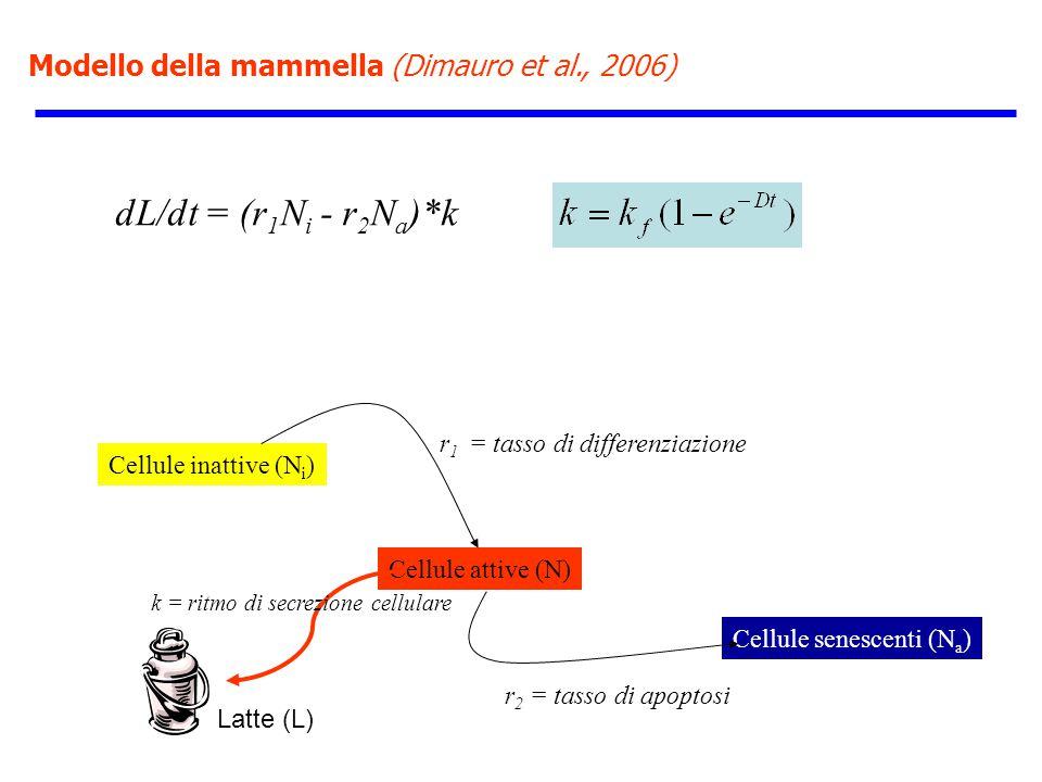 Modello della mammella (Dimauro et al., 2006) Cellule inattive (N i ) Cellule attive (N) dL/dt = (r 1 N i - r 2 N a )*k Cellule senescenti (N a ) r 1