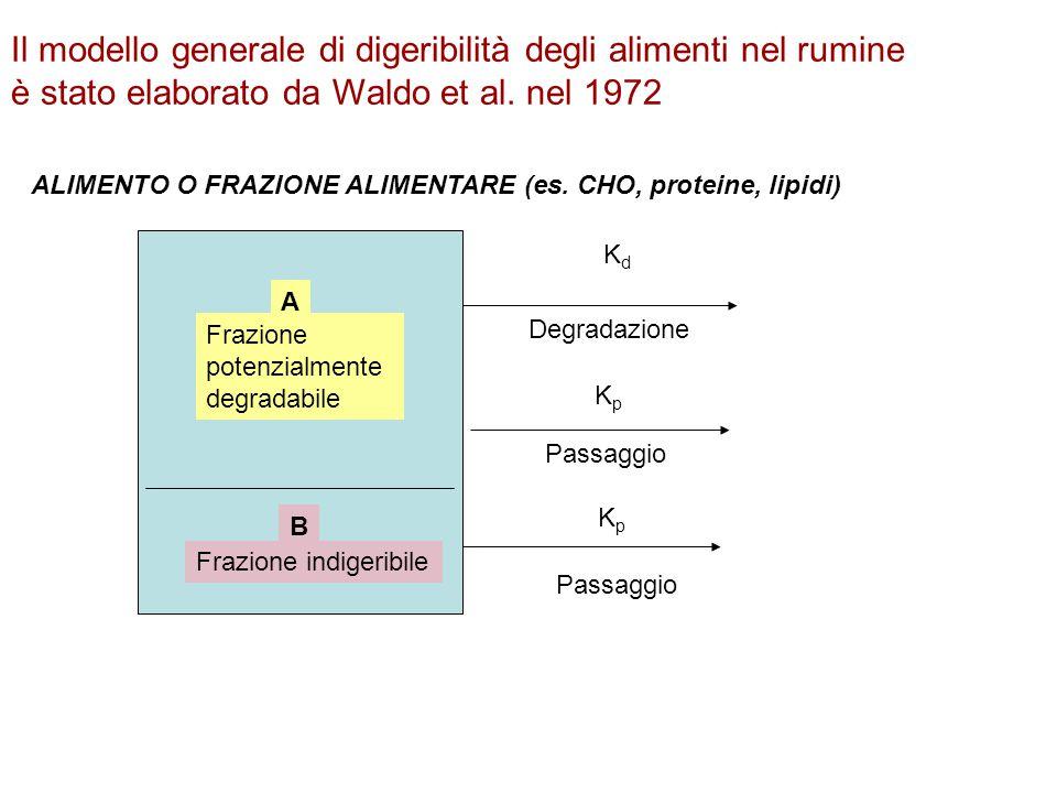 Il modello generale di digeribilità degli alimenti nel rumine è stato elaborato da Waldo et al. nel 1972 A Frazione potenzialmente degradabile B Frazi