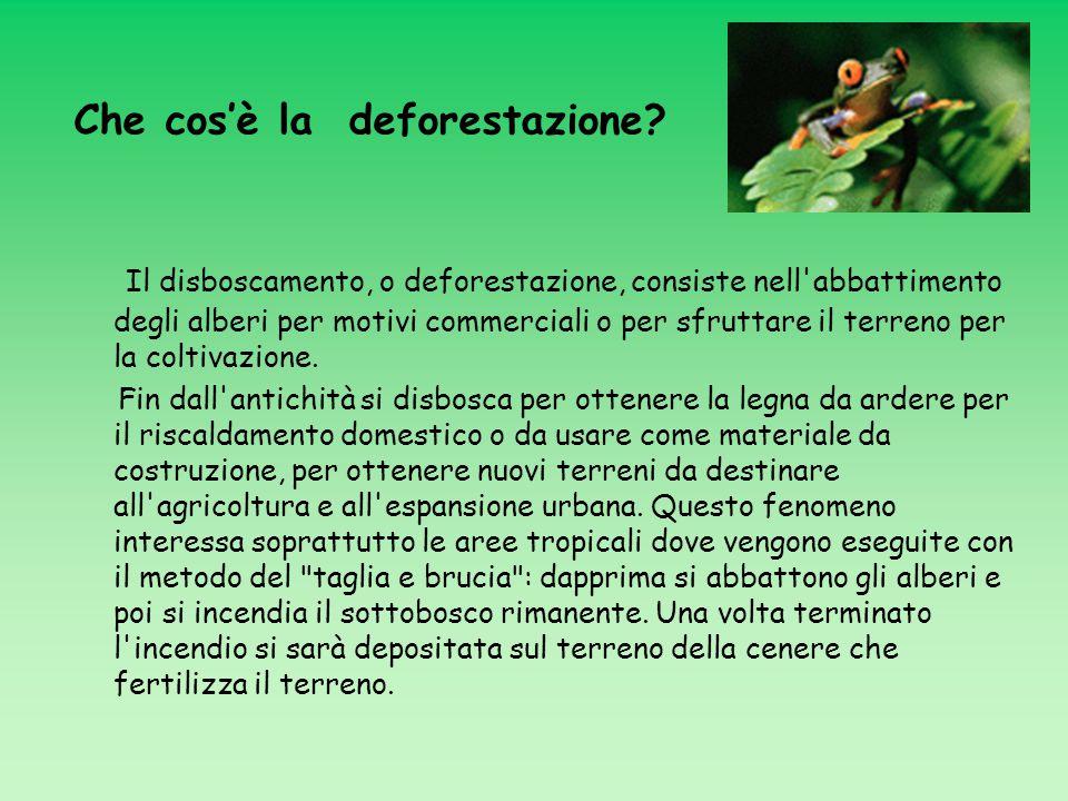 I l disboscamento, o deforestazione, consiste nell'abbattimento degli alberi per motivi commerciali o per sfruttare il terreno per la coltivazione. Fi