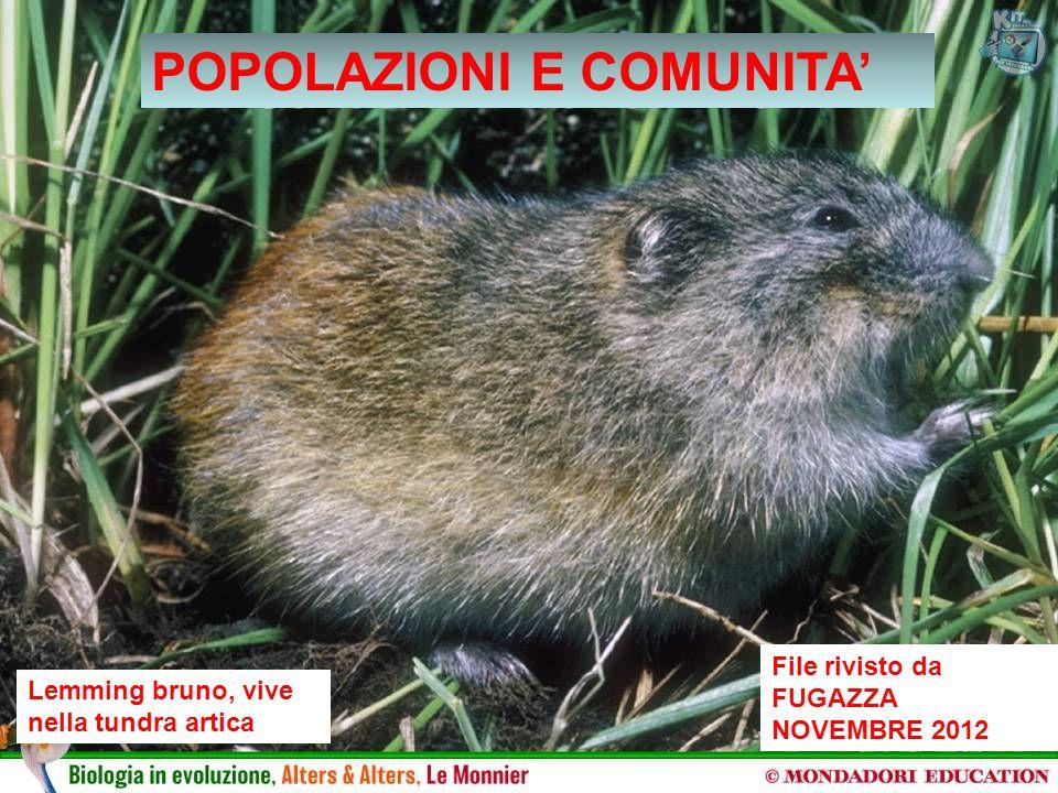 File rivisto da FUGAZZA NOVEMBRE 2012 Lemming bruno, vive nella tundra artica POPOLAZIONI E COMUNITA'