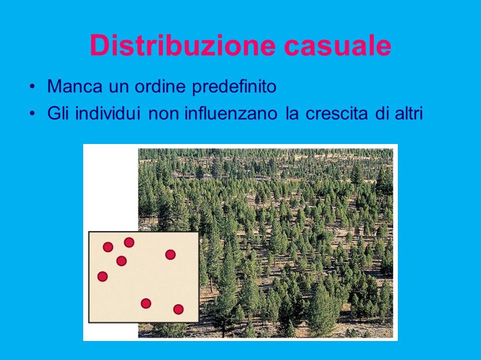 Distribuzione casuale Manca un ordine predefinito Gli individui non influenzano la crescita di altri