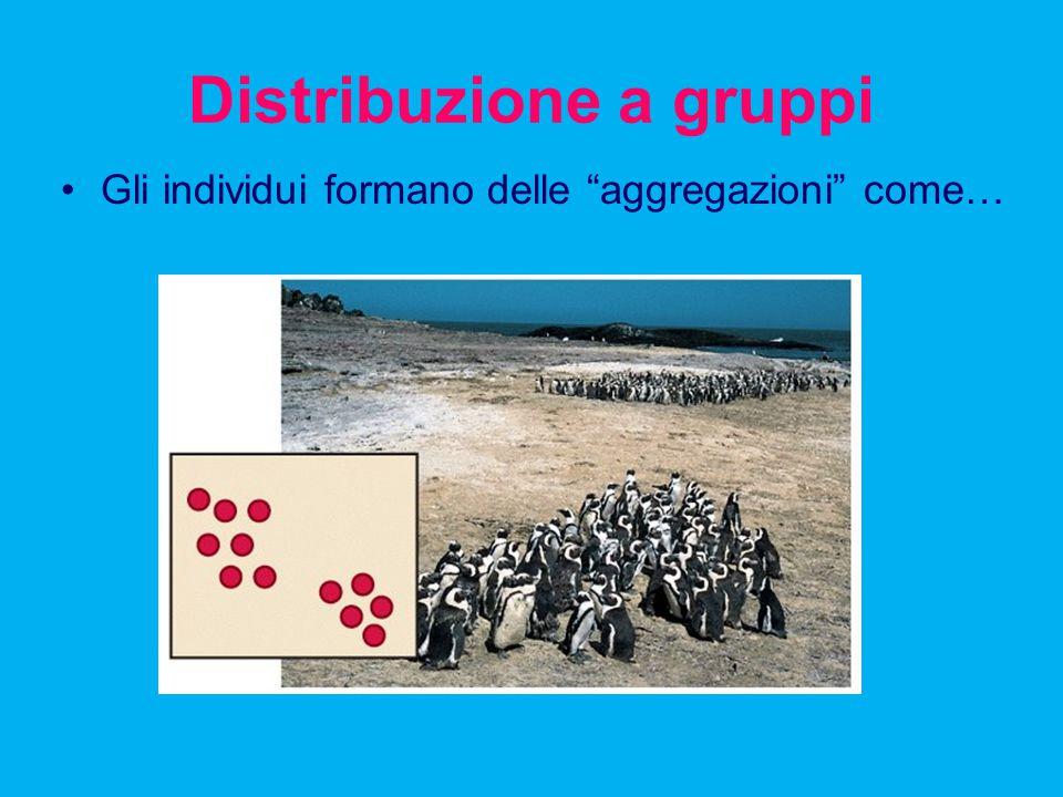 """Distribuzione a gruppi Gli individui formano delle """"aggregazioni"""" come…"""