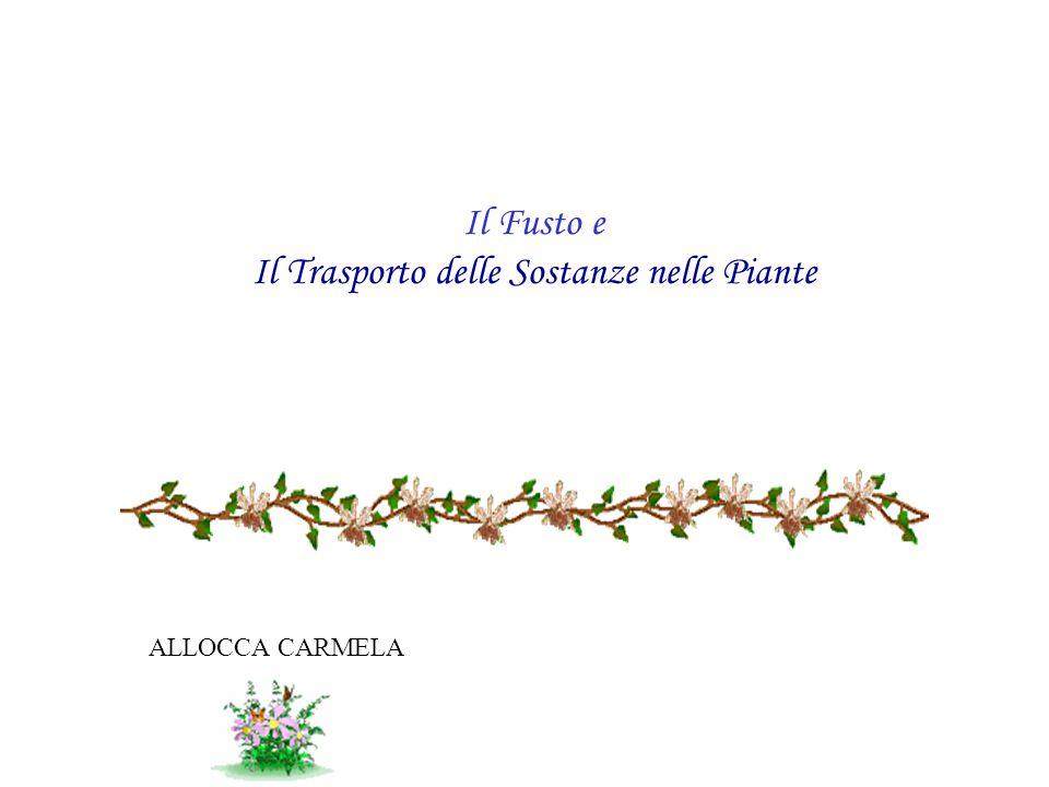 La funzione principale del fusto è quella di supporto; esso infatti sostiene i diversi organi della pianta (rami, fiori e frutti) e nello stesso tempo svolge la funzione di conduzione e di riserva.