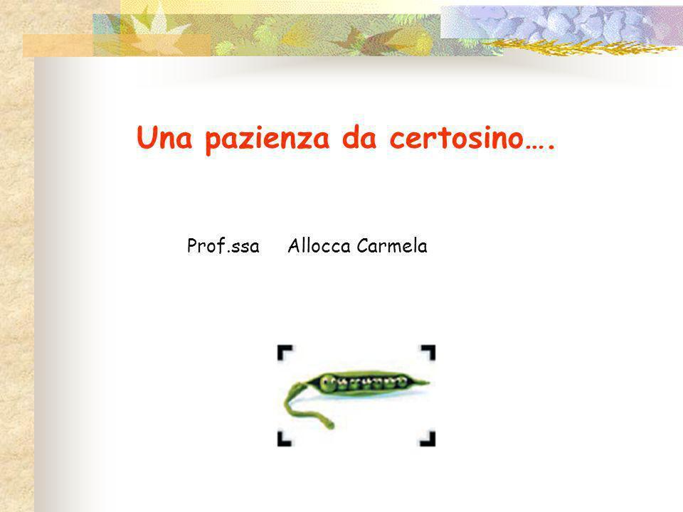 Una pazienza da certosino…. Prof.ssa Allocca Carmela