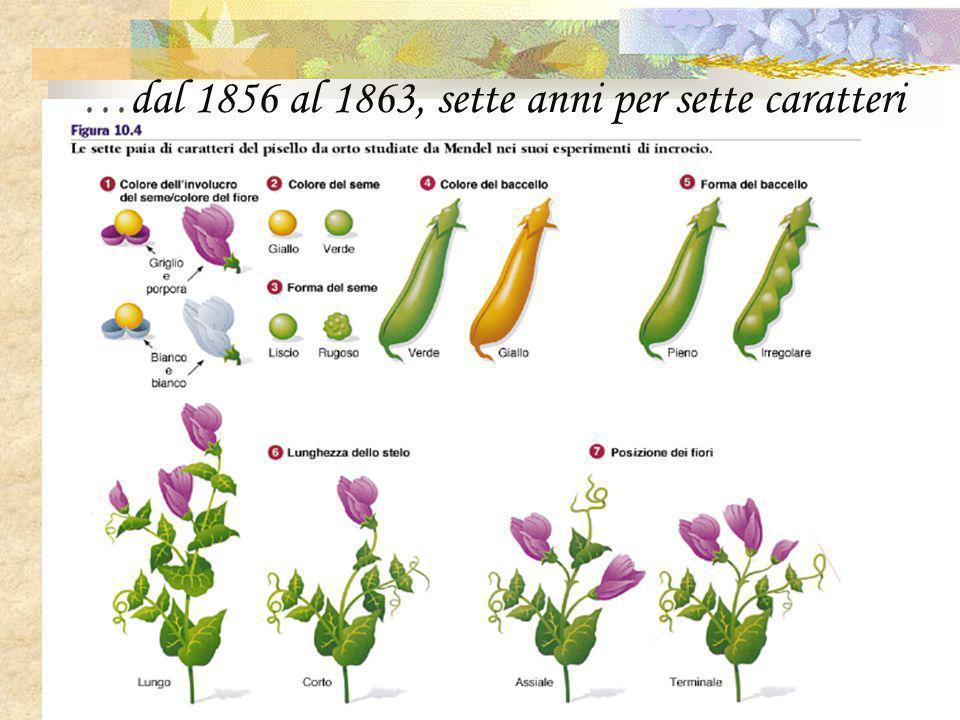…dal 1856 al 1863, sette anni per sette caratteri