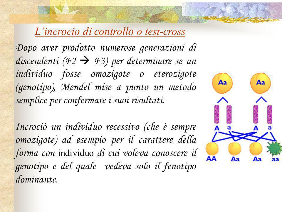 Dopo aver prodotto numerose generazioni di discendenti (F2  F3) per determinare se un individuo fosse omozigote o eterozigote (genotipo), Mendel mise
