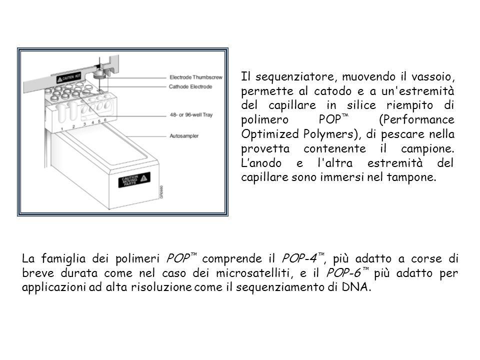 Il sequenziatore, muovendo il vassoio, permette al catodo e a un estremità del capillare in silice riempito di polimero POP ™ (Performance Optimized Polymers), di pescare nella provetta contenente il campione.