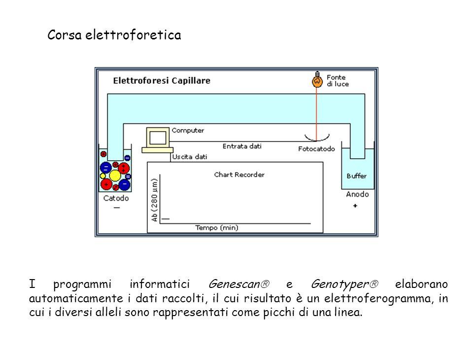 Corsa elettroforetica I programmi informatici Genescan  e Genotyper  elaborano automaticamente i dati raccolti, il cui risultato è un elettroferogramma, in cui i diversi alleli sono rappresentati come picchi di una linea.