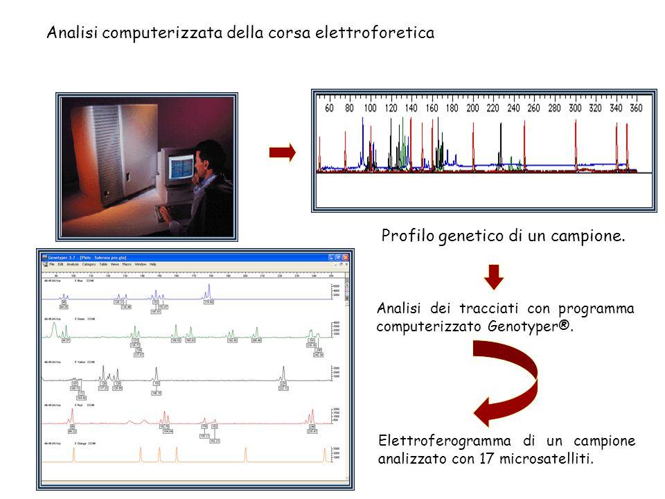 Analisi computerizzata della corsa elettroforetica Analisi dei tracciati con programma computerizzato Genotyper®. Profilo genetico di un campione. Ele