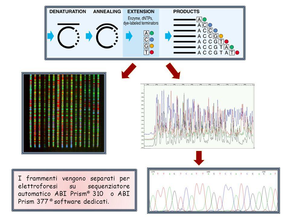 I frammenti vengono separati per elettroforesi su sequenziatore automatico ABI Prism ® 310 o ABI Prism 377 ® software dedicati.