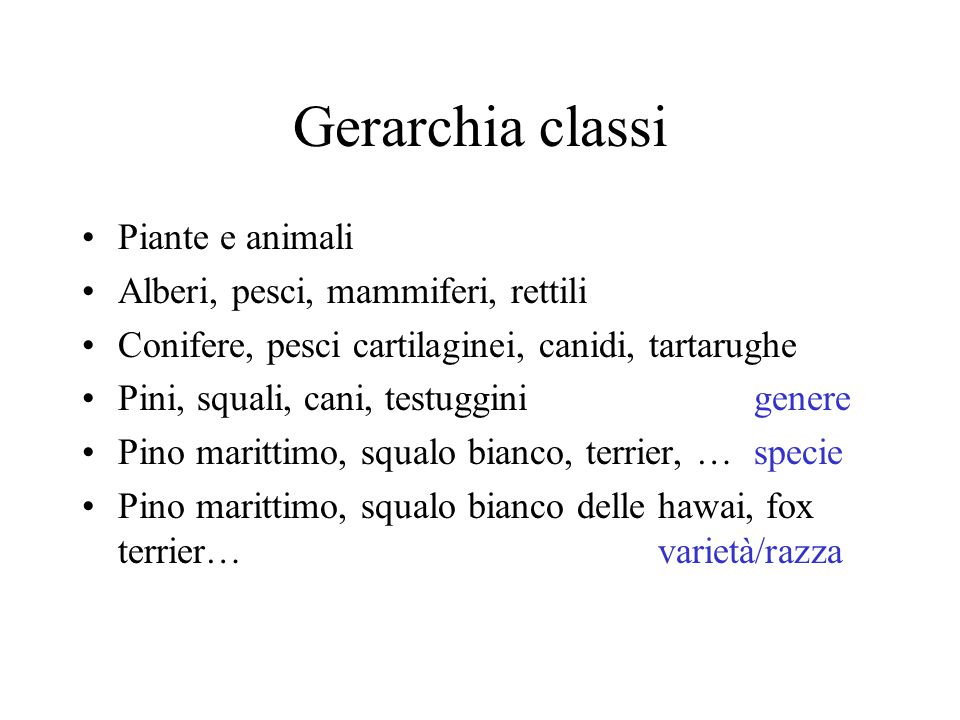 Gerarchia classi Piante e animali Alberi, pesci, mammiferi, rettili Conifere, pesci cartilaginei, canidi, tartarughe Pini, squali, cani, testugginigen