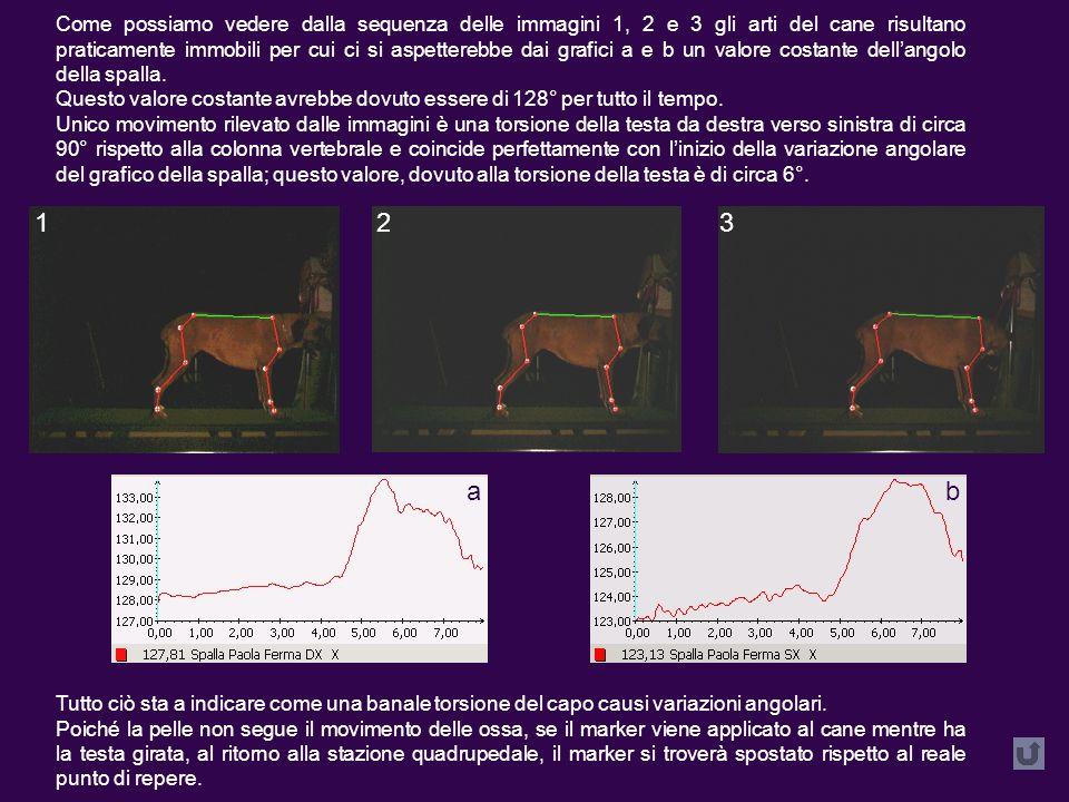 Come possiamo vedere dalla sequenza delle immagini 1, 2 e 3 gli arti del cane risultano praticamente immobili per cui ci si aspetterebbe dai grafici a