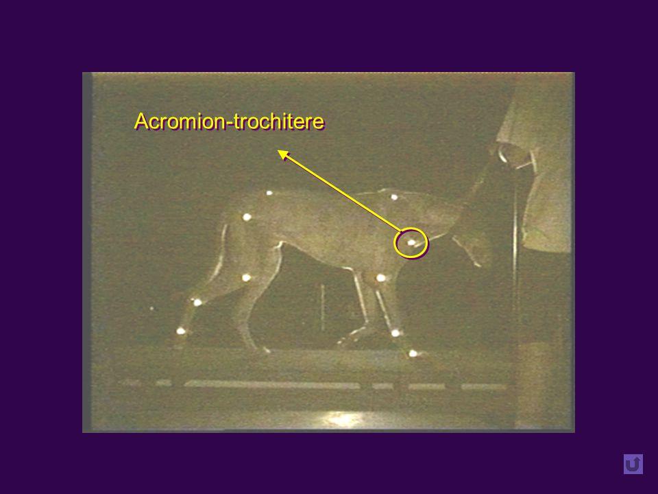 Acromion-trochitere