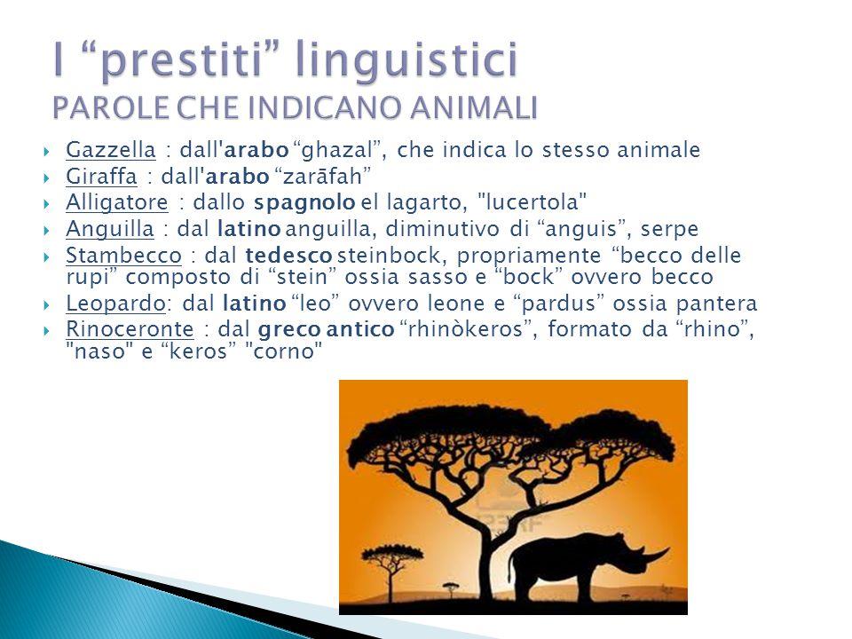 """ Gazzella : dall'arabo """"ghazal"""", che indica lo stesso animale  Giraffa : dall'arabo """"zarāfah""""  Alligatore : dallo spagnolo el lagarto,"""