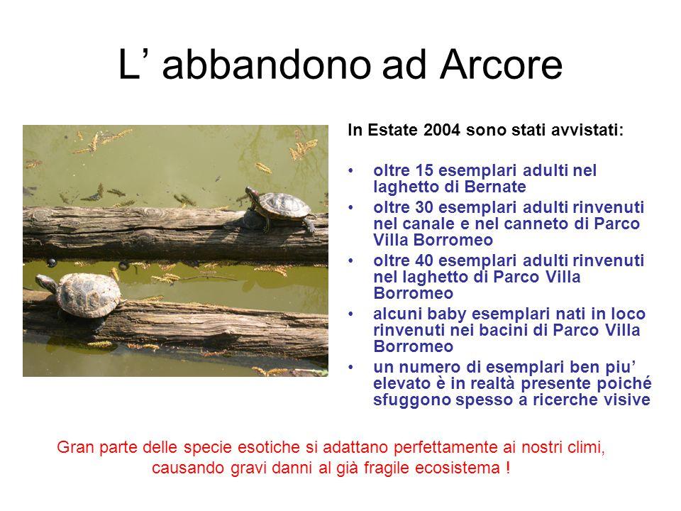 L' abbandono ad Arcore In Estate 2004 sono stati avvistati: oltre 15 esemplari adulti nel laghetto di Bernate oltre 30 esemplari adulti rinvenuti nel