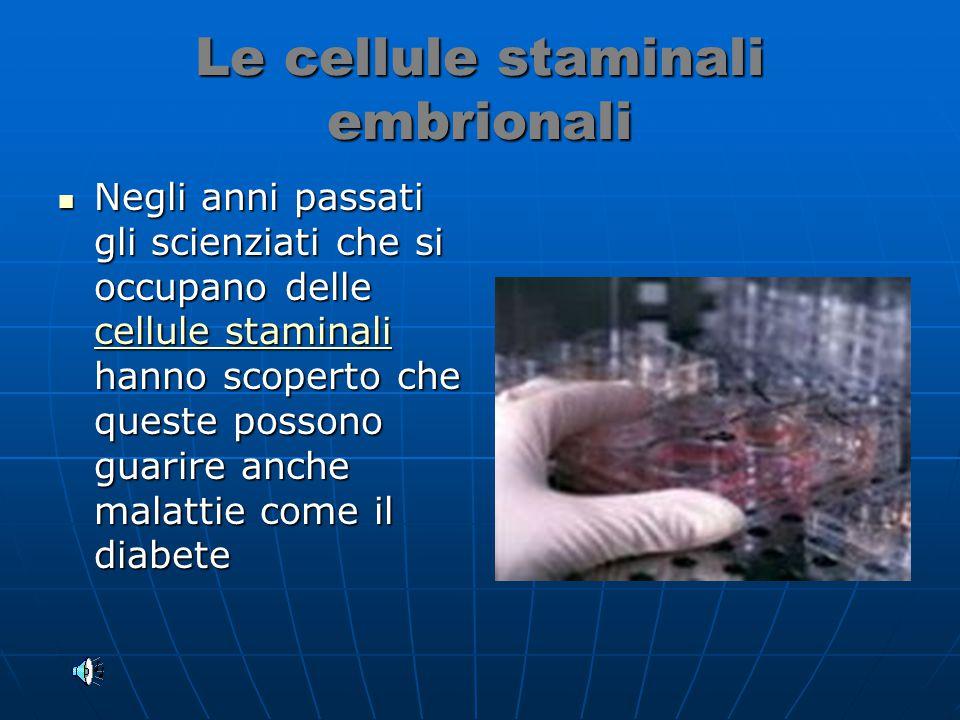 Le cellule staminali embrionali Negli anni passati gli scienziati che si occupano delle cellule staminali hanno scoperto che queste possono guarire anche malattie come il diabete Negli anni passati gli scienziati che si occupano delle cellule staminali hanno scoperto che queste possono guarire anche malattie come il diabete cellule staminali cellule staminali