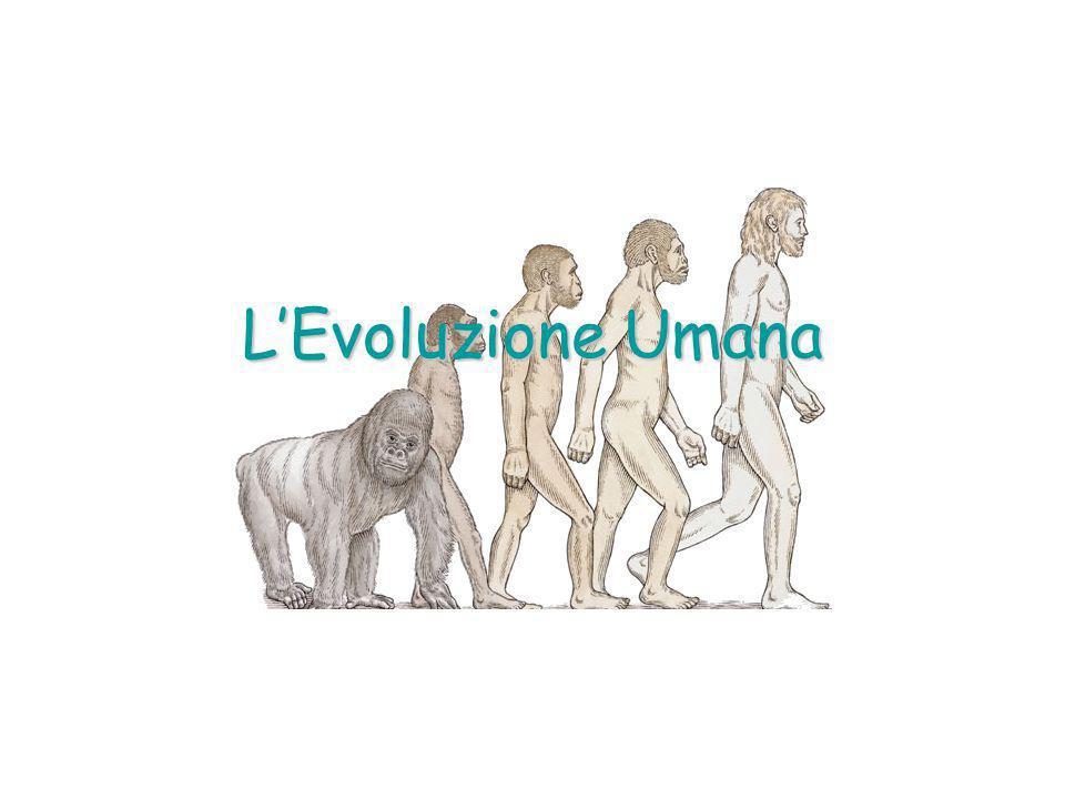 Le Origini dell'Uomo I fossili appartenenti agli antenati dell'uomo risalgono al massimo a circa 5 milioni di anni fa: della storia precedente sappiamo perciò molto poco.