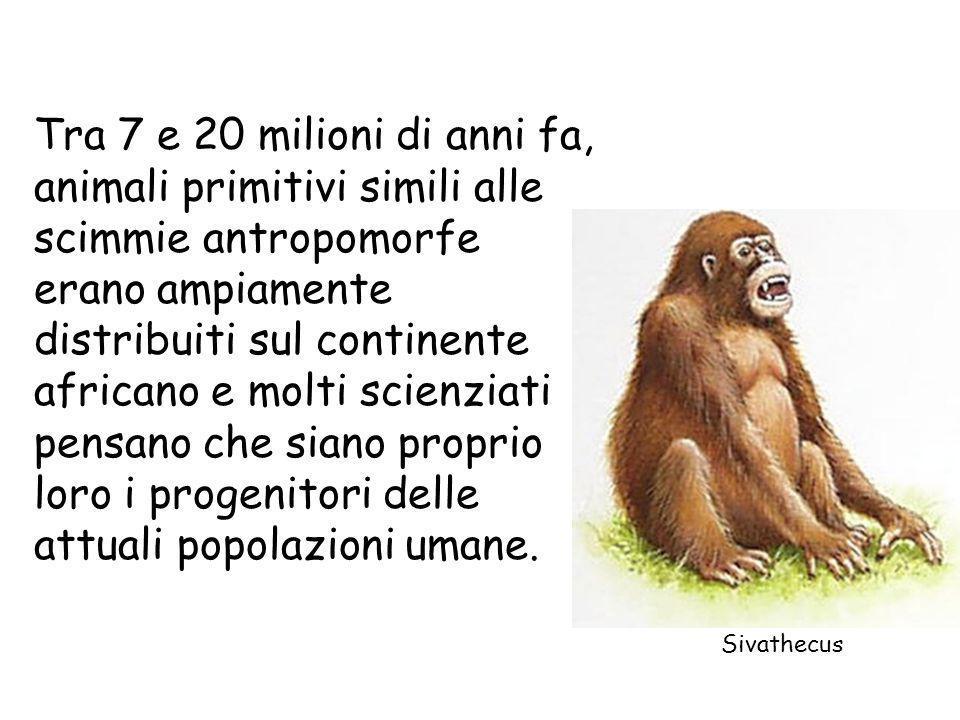 Tra 7 e 20 milioni di anni fa, animali primitivi simili alle scimmie antropomorfe erano ampiamente distribuiti sul continente africano e molti scienzi