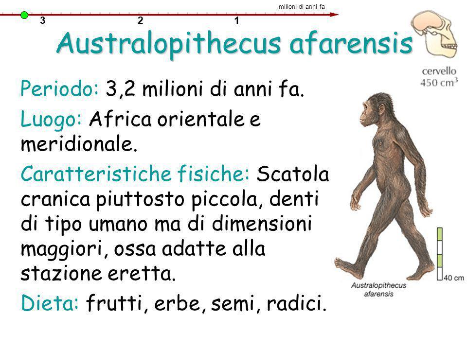 Australopithecus afarensis Periodo: 3,2 milioni di anni fa. Luogo: Africa orientale e meridionale. Caratteristiche fisiche: Scatola cranica piuttosto