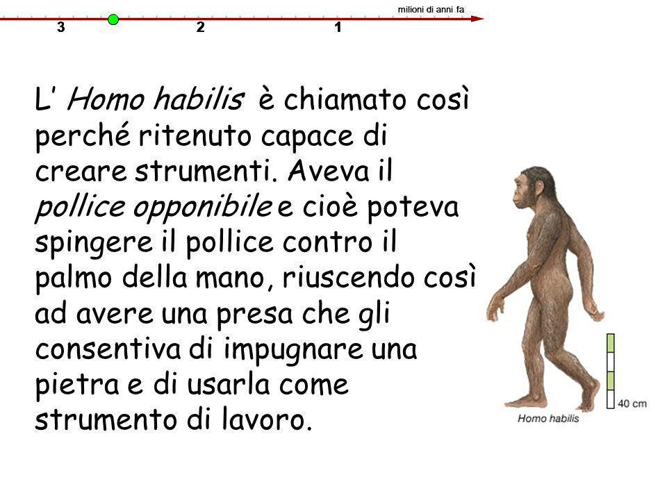 L' Homo habilis è chiamato così perché ritenuto capace di creare strumenti. Aveva il pollice opponibile e cioè poteva spingere il pollice contro il pa