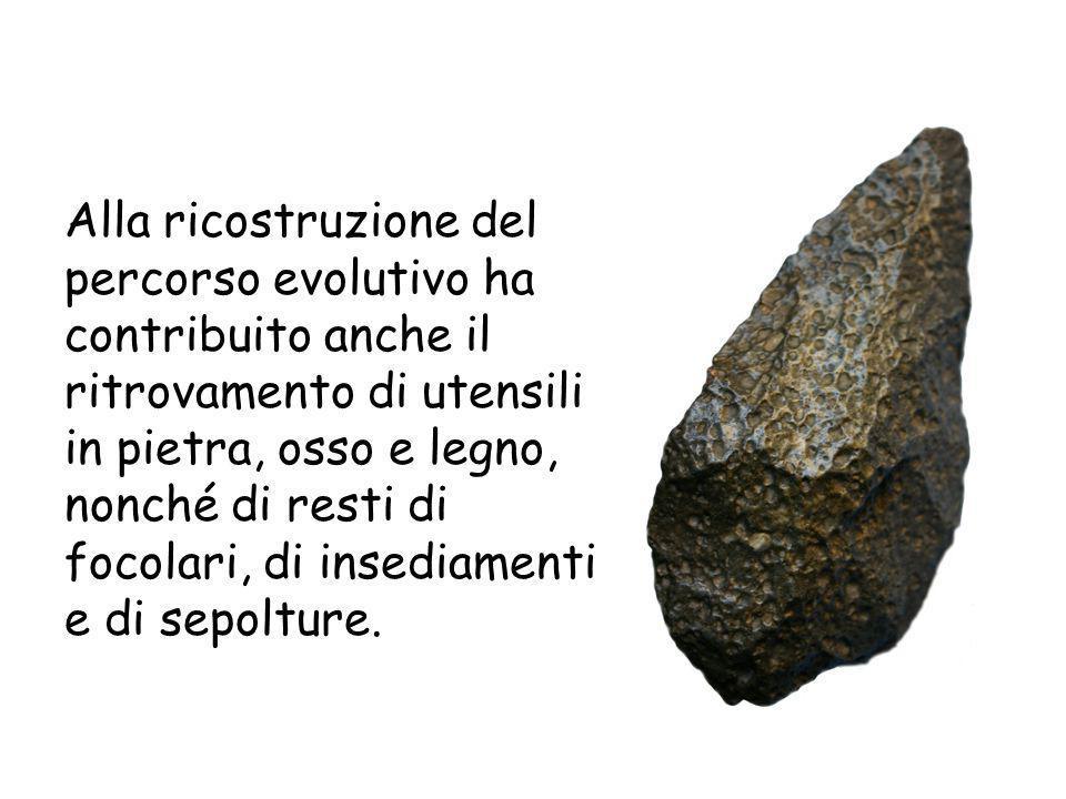 Alla ricostruzione del percorso evolutivo ha contribuito anche il ritrovamento di utensili in pietra, osso e legno, nonché di resti di focolari, di in