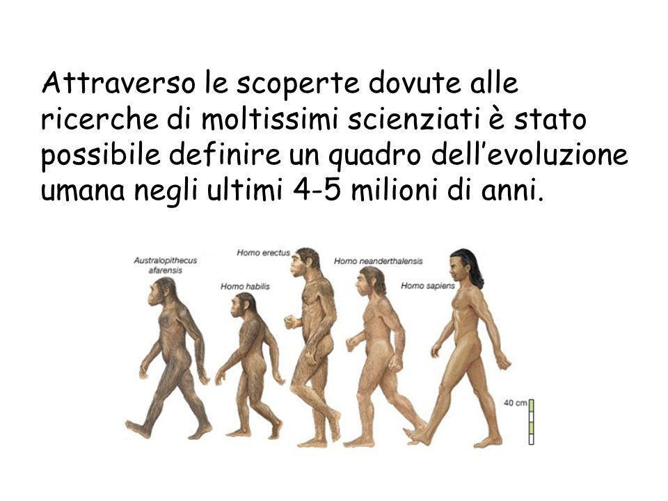 Attraverso le scoperte dovute alle ricerche di moltissimi scienziati è stato possibile definire un quadro dell'evoluzione umana negli ultimi 4-5 milio
