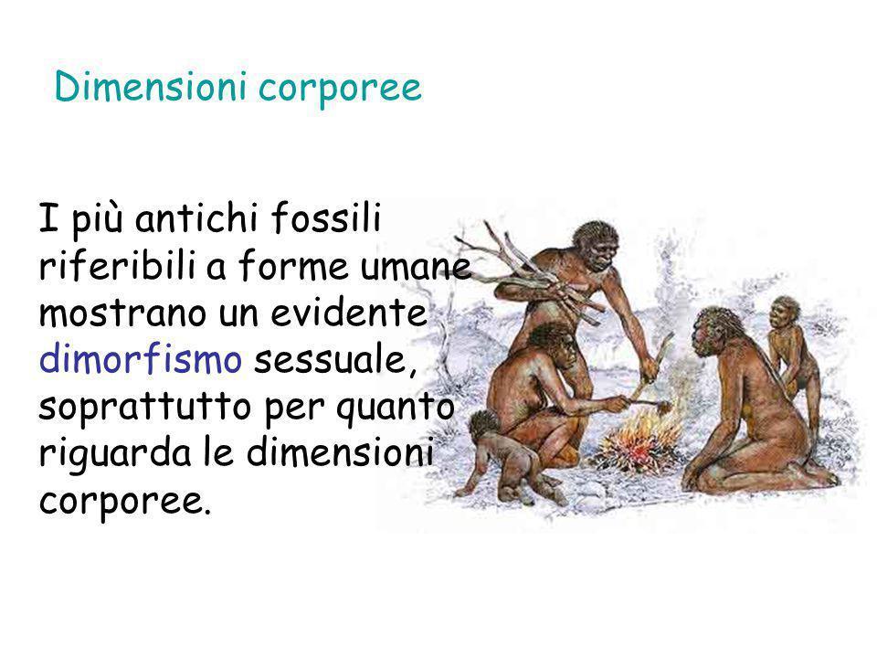 Dimensioni corporee I più antichi fossili riferibili a forme umane mostrano un evidente dimorfismo sessuale, soprattutto per quanto riguarda le dimens
