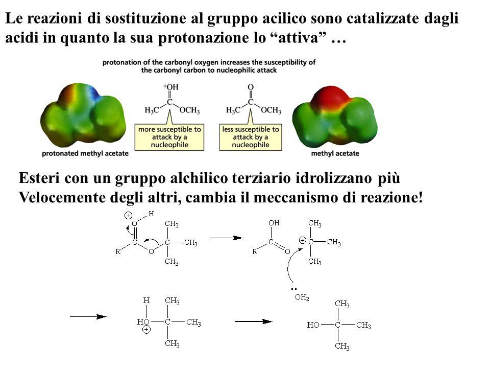 """Le reazioni di sostituzione al gruppo acilico sono catalizzate dagli acidi in quanto la sua protonazione lo """"attiva"""" … Esteri con un gruppo alchilico"""