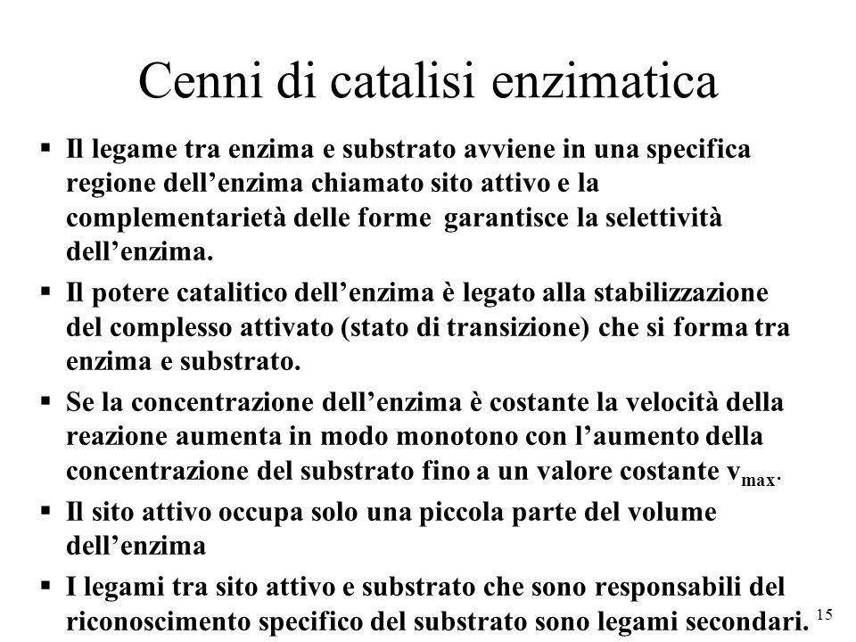 Cenni di catalisi enzimatica  Il legame tra enzima e substrato avviene in una specifica regione dell'enzima chiamato sito attivo e la complementarietà delle forme garantisce la selettività dell'enzima.