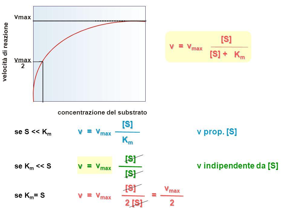 v = v max [S] KmKmKmKm [S] + concentrazione del substrato v e l o c i t à d i r e a z i o n e v max v 2 se S << K m v = v max [S] KmKmKmKm v prop.
