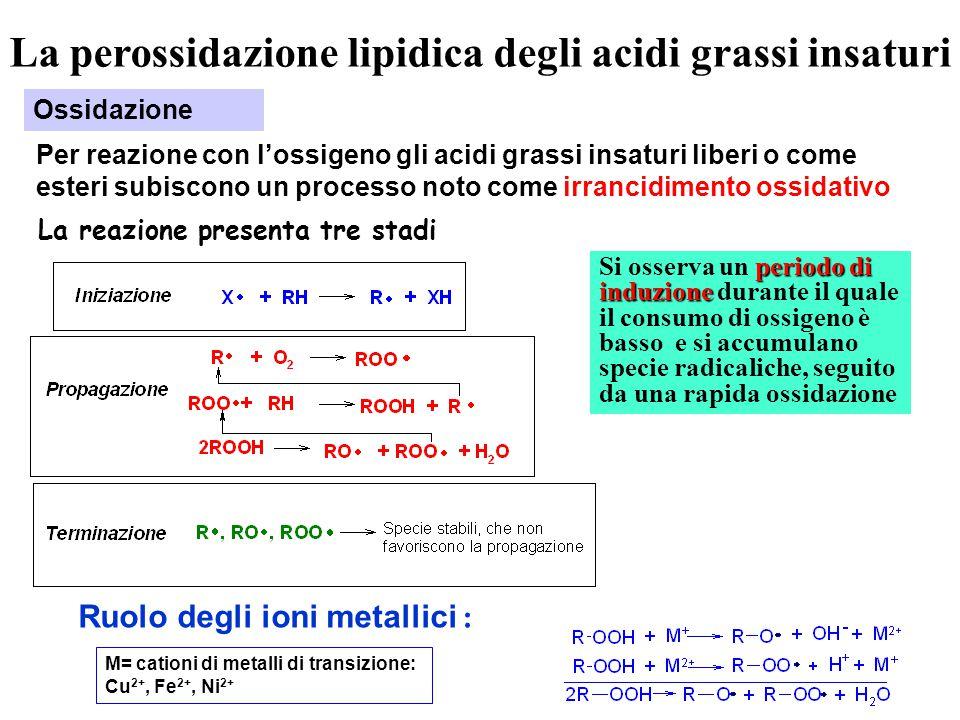 La perossidazione lipidica degli acidi grassi insaturi Ossidazione Per reazione con l'ossigeno gli acidi grassi insaturi liberi o come esteri subiscono un processo noto come irrancidimento ossidativo La reazione presenta tre stadi periodo di induzione Si osserva un periodo di induzione durante il quale il consumo di ossigeno è basso e si accumulano specie radicaliche, seguito da una rapida ossidazione Ruolo degli ioni metallici : M= cationi di metalli di transizione: Cu 2+, Fe 2+, Ni 2+
