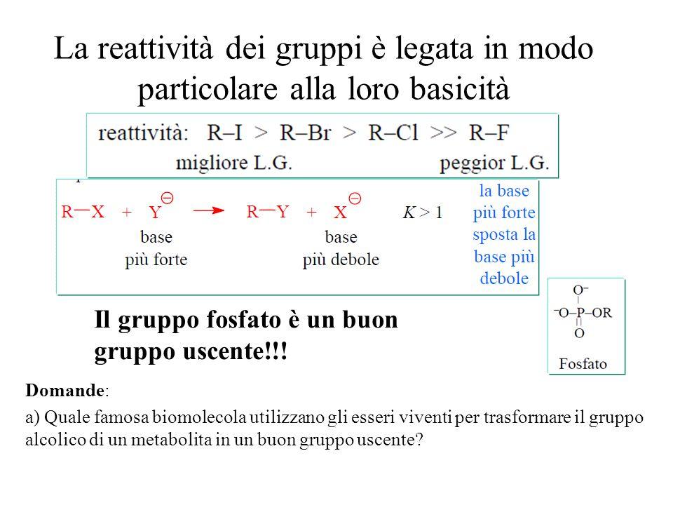 La reattività dei gruppi è legata in modo particolare alla loro basicità Domande: a) Quale famosa biomolecola utilizzano gli esseri viventi per trasfo