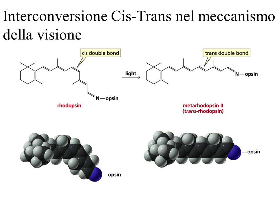 Meccanismo E2 La conformazione della molecola è tale da avere le coppie elettroniche coinvolte sullo stesso piano.